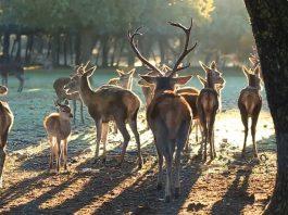 Reserva de Ciervos. Monte el Viejo. Palencia