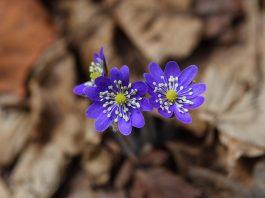 Conoce y fotografía la Flora Silvestre de la Montaña Palentina