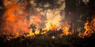 Baja a nivel 1 el incendio forestal del Real Sitio de San Ildefonso