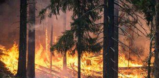 Declarado nivel 2 en el incendio declarado en Sariegos, León
