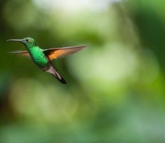 La Junta promociona el turismo ornitológico y de observación de la naturaleza en la Feria Birdfair de Rutland, Inglaterra